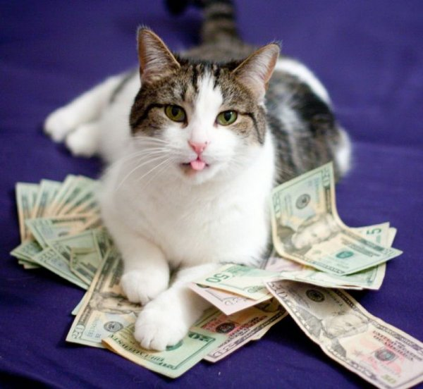 Мемы про котов оплатят все: Прибыль с рунета обеспечит его автономность